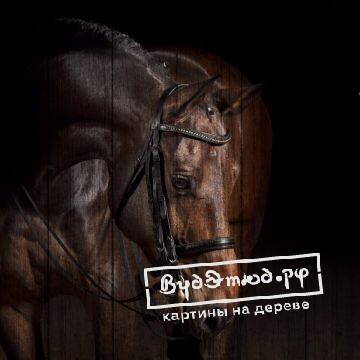 лошади11