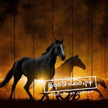 лошади12