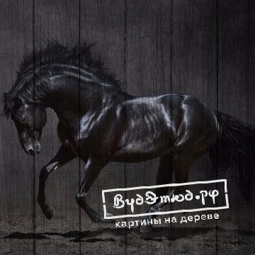 лошади3