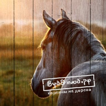 лошади7